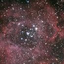 NGC 2244  Rosette Nebula,                                Ruslan