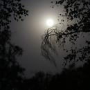 Lune dans les arbres,                                Gizmow