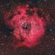 NGC 2237 Rosette Nebula,                                Chad Andrist