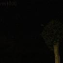 Pleaides: First Astro Pic!,                                KillaStorm1000