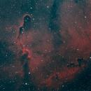 Elephant Trunk nebula,                                Corentin Martine