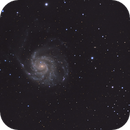 M101,                                Clayton Bownds