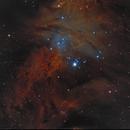 Fur Fox Nebula Sh2-273_,                                Sylvain Lefebvre