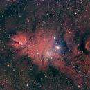 NGC 2264 Cone Nebula & Christmas Tree Cluster #4,                                Molly Wakeling