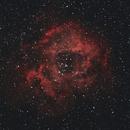 Rosette Nebula (Skull),                                Calzune