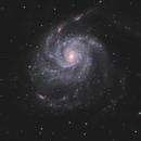 M101 - Pinwheel Galaxy,                                Mikko Viljamaa