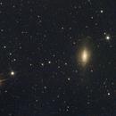 NGC3521,                                Ray Heinle