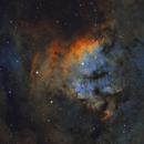 NGC 7822 in Cepheus,                                Steve Milne