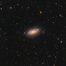 Messier 63 The Sunflower Galaxy,                                Barry Wilson