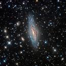 NGC 7331,                                Colin McGill