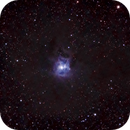 Iris Nebula - NGC 7023,                                Kurt Zeppetello