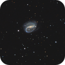 NGC7479, small but nice.,                                Olly Penrice