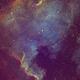 NGC7000 ,                                Peter Proulx
