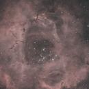 Rosette  - HOO 2021 - Dusty Rose,                                jamiecflinn