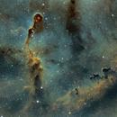 IC1396-Elephant Trunk in SHO,                                Marius