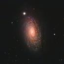 M63 - Sunflower Galaxy,                                Kyle Butler