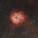Rosette Nebula (Caldwell 49),                                Wilson Yam