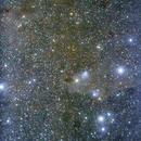 The region of LDN 1235 (Dark Shark) Nebula,                                Nikola Nikolov