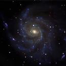 M101 Pinwheel Galaxy. C9.25 on CG-5 unguided.,                                Juan Pablo (Observatorio JuPiTeR)