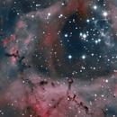 Rosette Nebula,                                Alex Roman