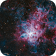 Tarantula Nebula,                                GoldfieldAstro