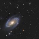 Messier 81,                                Bert Scheuneman