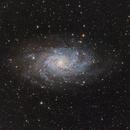 M33,                                Terri