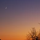 Moon following Venus in the trees,                                Neil Emmans