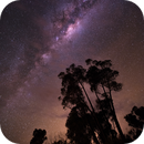 Spring in Australia,                                Wilson Lee