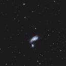 NGC 4490  T250 f/4  /  ATIK ONE  /  AZEQ6,                                Pulsar59