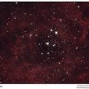 Rosette Nebula,                                Marcelo Domingues