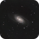 NGC 2903,                                David Johnson