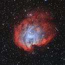 NGC 2174 Nebulosa Testa di scimmia,                                angelo mazzotti