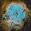 Rosette Nebula in SHO,                                Cfosterstars