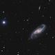 NGC 4536,                                Peter Goodhew