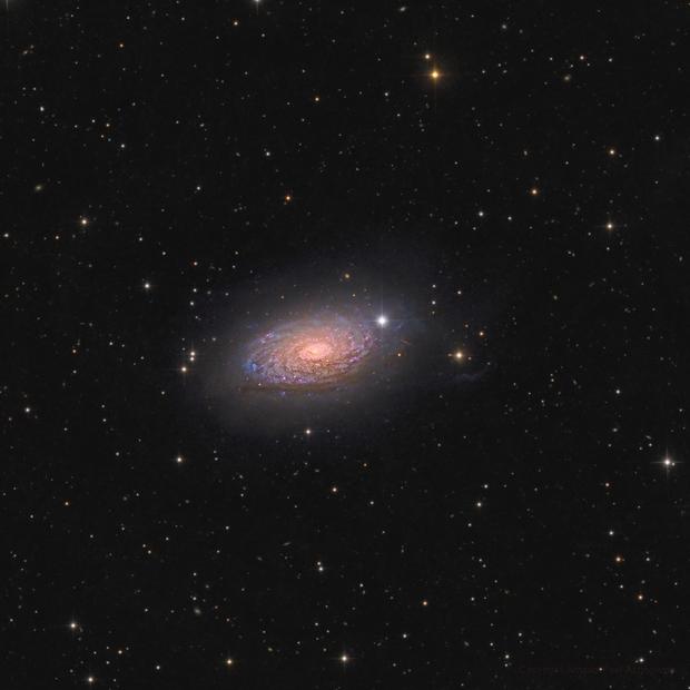 M63 - the Sunflower galaxy - in Canes Venatici,                                Arnaud Peel
