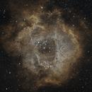 Rosette Nebula,                                pyali