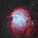 Monkeyhead Nebula,                                Clem