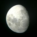 Moon ,                                Whiskcat