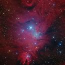 Cone Nebula,                                Zhuoqun Wu