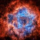 The Rosette Nebula (NGC 2237) SHO by astromat89,                                Daniel Nobre