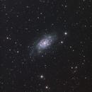 """NGC2403,                                Makoto""""G-H""""Shindou"""