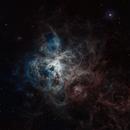 ~ eight legged nebula ~,                                Daniel Kuebler