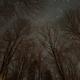 Orion Through The Trees,                                JDJ