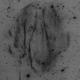 NEW DISCOVERY: Strottner-Drechsler 56 (StDr56) Goblet of Fire nebula,                                Marcel Drechsler
