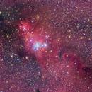 NGC2264, SH2-273 The Cone, Fox Fur Nebula, and Christmas Tree Area,                                Ou Mingzhi