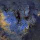NGC 7822,                                Gary Opitz