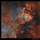 IC 1795,                                Metsavainio