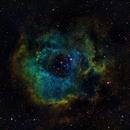 Rosette nebula SHO,                                jahnpahwa