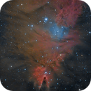NGC 2264,                                Michael Wolter